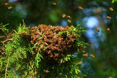 Honey bees swarming on tree stock images