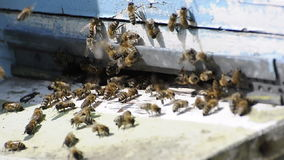 Honey bees swarming up and flying around beehive Stock Photos