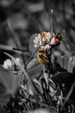 Honey Bees tillsammans III Arkivfoton