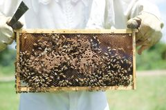 Honey bees on a tray of honey. Stock Image