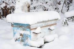 Honey Bees In The Winter Abejas de la invernada en colmena En apicultura, un racimo del invierno es un racimo bien definido de ab Imágenes de archivo libres de regalías
