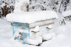 Honey Bees In The Winter. Wintering Bees in Beehive. In beekeeping, a winter cluster is a well-defined cluster of honey bees Royalty Free Stock Images
