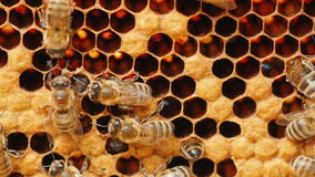 Honey bees work in the hive Stock Photos
