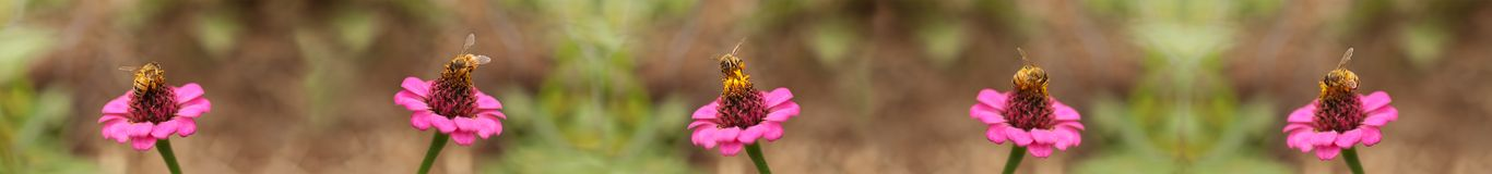 Honey bees worker bee border background Stock Photo
