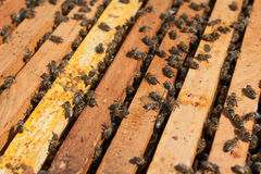 Honey Bees Working Imagenes de archivo