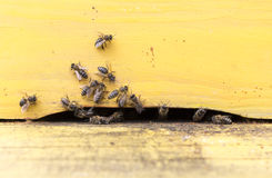 Honey bees in yellow beehive Royalty Free Stock Photography