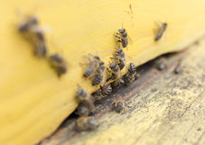 Honey bees in yellow beehive Royalty Free Stock Image