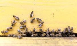 Honey bees in yellow beehive Royalty Free Stock Photos