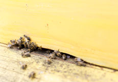 Honey bees in yellow beehive Stock Photos