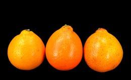 Honey Bell oranges Stock Photo