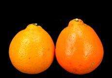 Honey Bell oranges Royalty Free Stock Photos