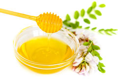 Honey in bowl and acacia flower Stock Images