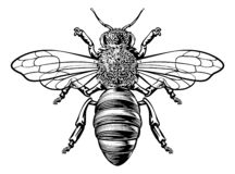 Free Honey Bumble Bee Woodcut Vintage Bumblebee Drawing Royalty Free Stock Images - 145739049