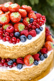 Honey cake with fruits Royalty Free Stock Image