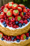 Honey cake with fruits Stock Photos