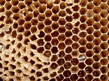 Honey cell 1 Stock Photo
