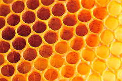 Honey cell Royalty Free Stock Image