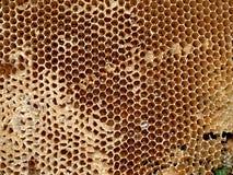 Honey cell Stock Photo