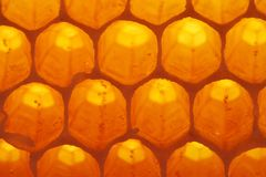 Honey-cell. (tasty linden honey Royalty Free Stock Images