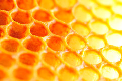 Honey cell Royalty Free Stock Photos