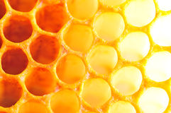 Honey cell Royalty Free Stock Images