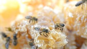 Honey cell heap. Close-up hd footage stock video