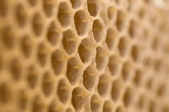 Honey cells Royalty Free Stock Image