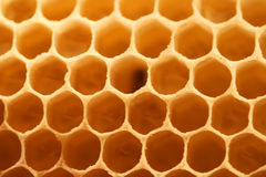 Honey cells Stock Photography