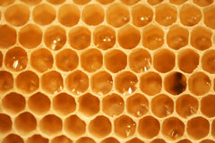 Honey cells Stock Image