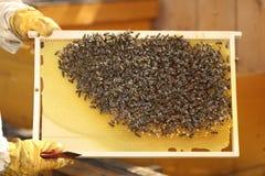 Honey cells Stock Image