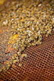 Honey cells Royalty Free Stock Photo