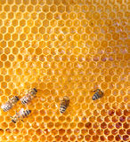 Honey Cells And Bees Royalty Free Stock Photography