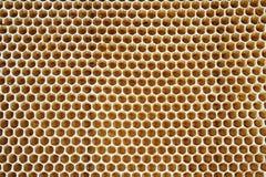 Honey cells stock photo