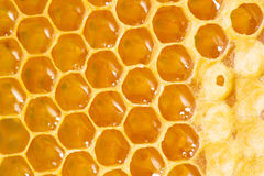 Honey cells. Royalty Free Stock Photo