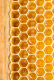 Honey cells. Stock Image