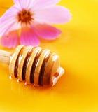 Honey close-up Royalty Free Stock Image