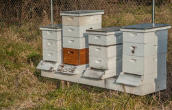 Honey Collectors Royalty Free Stock Images