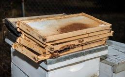 Honey Collectors Royalty Free Stock Photo