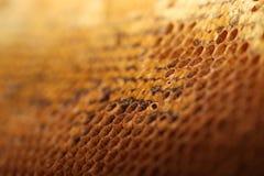 Honey Comb Foto de Stock