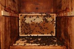 Honey Comb Imágenes de archivo libres de regalías