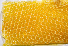 Honey comb Royalty Free Stock Photo