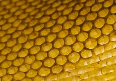 Honey comb. Honey is a sweet and viscous fluid produced by bees and other insects from the nectar of flowers. Honey is significantly sweeter than table sugar and Stock Photography