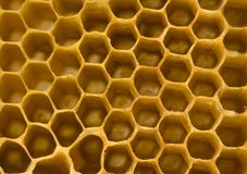 Honey comb. Honey is a sweet and viscous fluid produced by bees and other insects from the nectar of flowers. Honey is significantly sweeter than table sugar and Royalty Free Stock Image