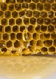 Honey comb. Honey is a sweet and viscous fluid produced by bees and other insects from the nectar of flowers. Honey is significantly sweeter than table sugar and Royalty Free Stock Photo