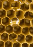 Honey comb. Honey is a sweet and viscous fluid produced by bees and other insects from the nectar of flowers. Honey is significantly sweeter than table sugar and Stock Image