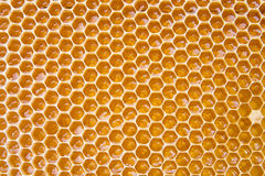 Honey in comb Royalty Free Stock Images