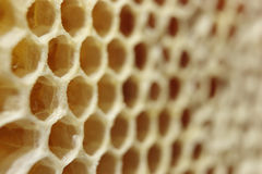 Honey comb Stock Image