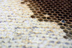 Honey / comb. Texture of honeycomb... DOF Stock Photography