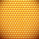 Honey comb Royalty Free Stock Images