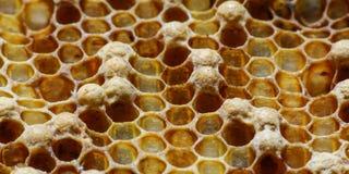 Honey Comb Imagenes de archivo